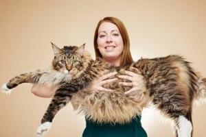 世界上最长的猫,英国缅因猫长119厘米