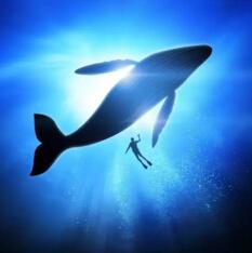 世界上最大的动物排行榜,蓝鲸重181吨(相当于25只非洲象)