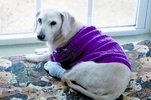 世界上最长寿的狗,29岁的拉布拉多已逝世(相当于人类203岁)