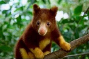 世界上最稀有的动物排行榜 你见过几种?