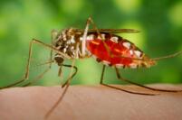 世界上最毒的十大昆虫排行榜,疟蚊每年会导致近200万人死亡
