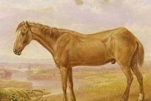 世界上最长寿的马竟达62岁高龄