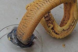 十大最疯狂的化学反应:法老之蛇大象牙膏狗吠反应你都知道吗