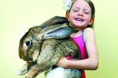世界上最大的兔子:一年吃掉4000跟胡萝卜