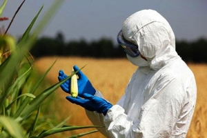 全球转基因作物种植面积排名