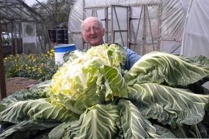 世界上最大的菜花 重量超过27公斤