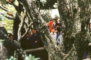 世界上最稀有的樹 地球僅有一棵