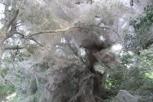 世界上最大的蜘蛛网