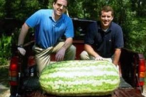世界上最大最重的西瓜