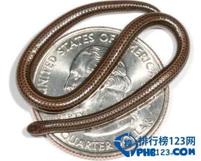 世界十大毒动物_【世界上最小的蛇】目前世界上最小的蛇类_排行榜123网