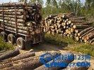 全球十大最名贵的木材,你听过几个?