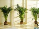 十大室内空气净化植物,哪个最好?