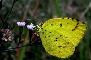 盤點自然界十大奇特罕見的黃色動物
