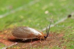 盘点十大真实存在的奇葩有趣昆虫