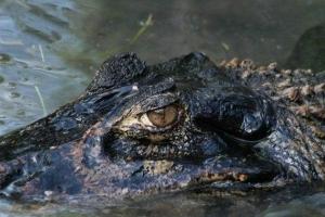 亚马逊河流中最可怕的十大动物排行榜