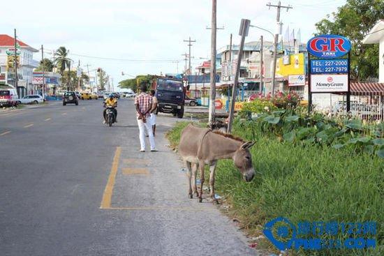 圭亚那首都乔治城