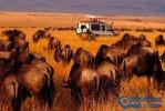 非洲顶级国家公园排行榜 非洲也有好的旅游景点