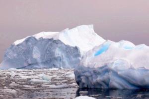 盘点南极洲不为众人所知的九大神秘物种 一起来看看吧