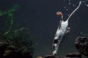 世界上最小的哺乳动物——小型鼩鼱