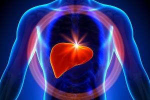 肝脏为什么是人体最大的解毒器官