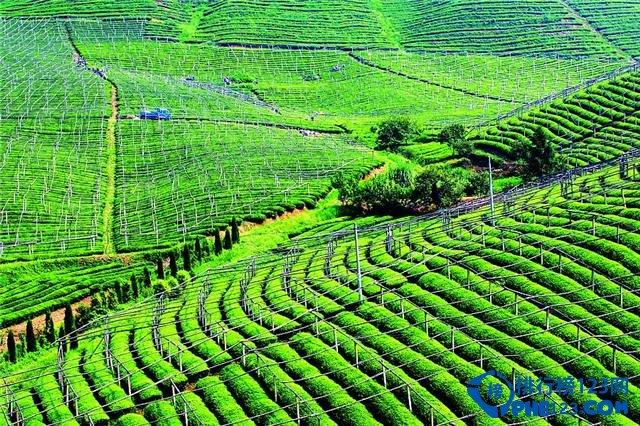 农业产业图片