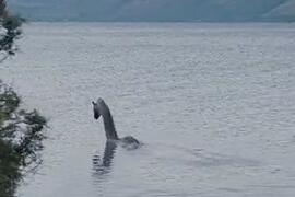 世界十大水怪排行榜图片,尼斯湖水怪最凶残