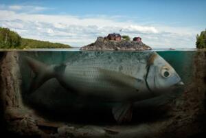 世界上最大的鱼:鲸鲨(长达20米/重1.2吨)