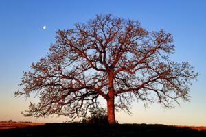 世界上最奇特的树木,能吃人救人导电吸血的树