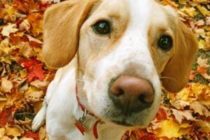 狗的寿命是多少年?平均寿命12-15年【附狗的寿命算法】