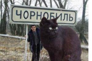 世界上最大的猫,乌克兰巨猫Angie(重726斤/核辐射异变)