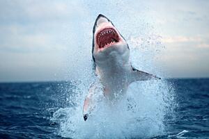 世界十大最危险?的鲨鱼,大白鲨噬人牛鲨致命