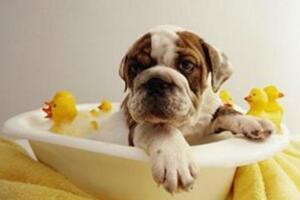 什么寵物沐浴露好,十大寵物沐浴露品牌排行榜