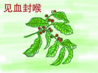 世界上最毒的植物:箭毒木含劇毒液體殺人于無形(見血封喉)