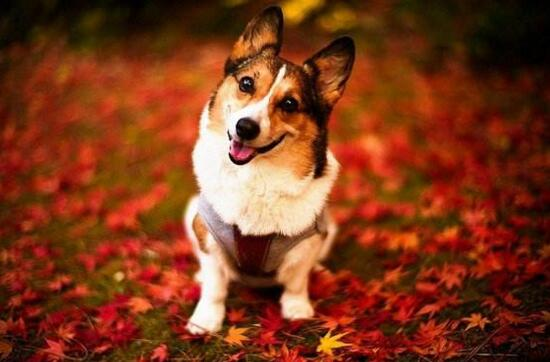 【组图】小狗图片,可爱小狗图片大全,萌你一脸血