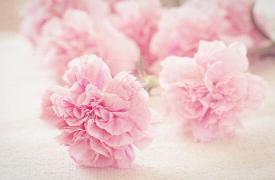 母亲节送什么花最好_母亲节送什么花,适合母亲节送的花排行榜_排行榜123网