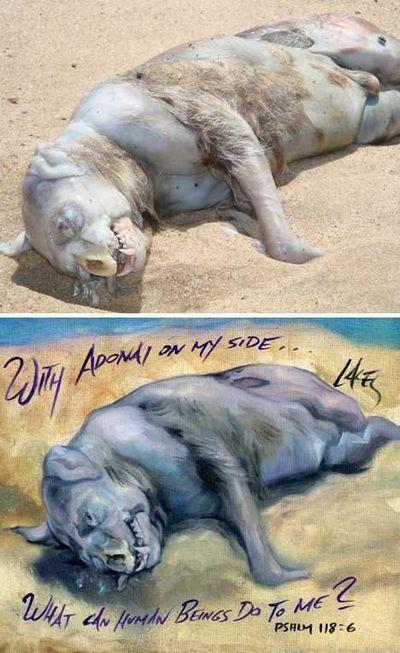 盘点那些惊现在海滩的奇怪生物 奇异 第8张