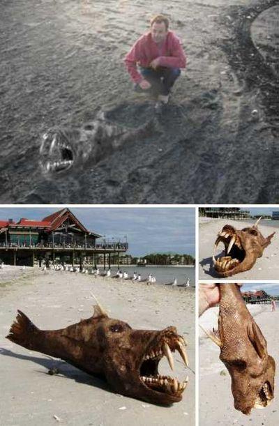 盘点那些惊现在海滩的奇怪生物 奇异 第3张