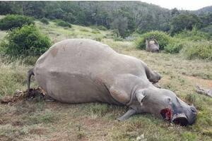 世界珍稀动物排行榜,白犀牛仅存一只(离灭绝只有一年)