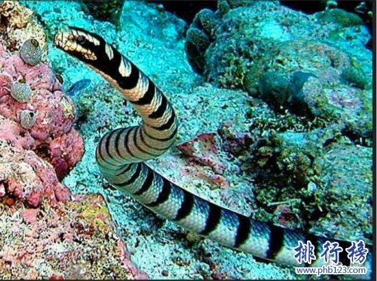 世界上最可爱蛇排名_世界上十大最毒的蛇排行榜,细鳞太攀蛇一口毒死25万只老鼠_排行 ...