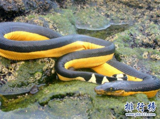 世界上最可爱蛇排名_世界上十大最毒的蛇排行榜,细鳞太攀蛇一口毒死25万只老鼠(3 ...