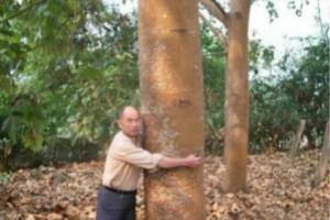 世界上生长最快的树,轻木10年能长16米(造飞机材料)