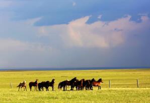 2017上半年内蒙古gdp排名,生产总值达8465亿(附城市钱柜娱乐777官方网站首页)