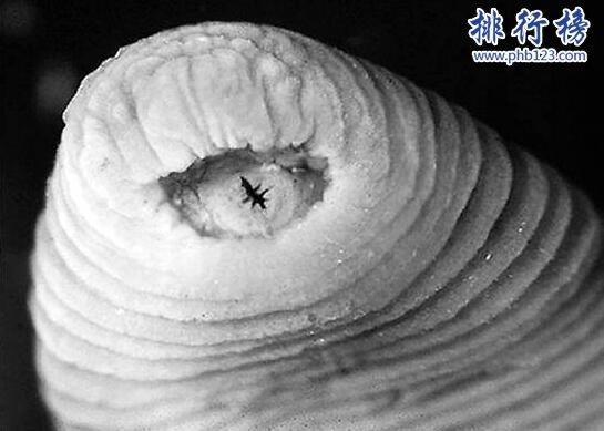 世界上最恐怖的吸血生物:暴君水蛭,丛林恐怖杀手(人类多次中招)