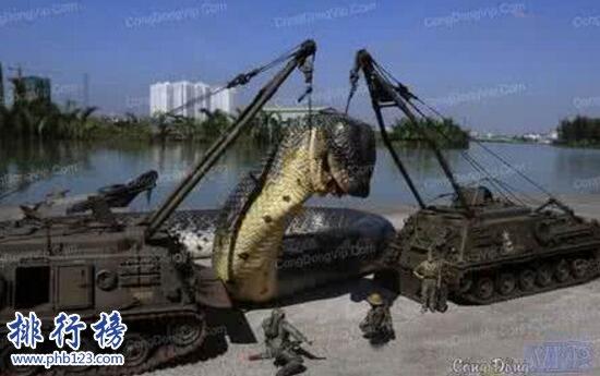 世界上最长的蛇是什么蛇,红海巨蛇长达500米