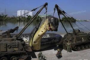 盘点蛇类世界之最,世界上最大的蛇是什么蛇