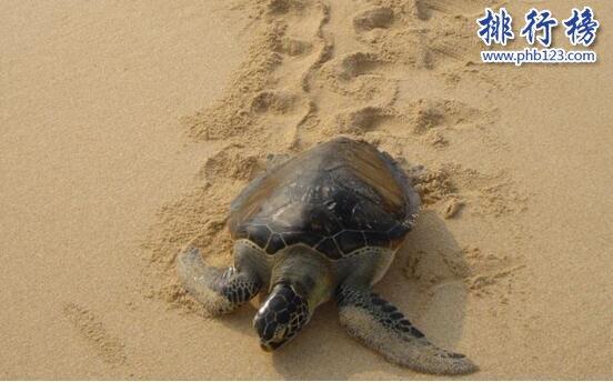 十大乌龟的世界之最,龟中博尔特打破短跑纪录