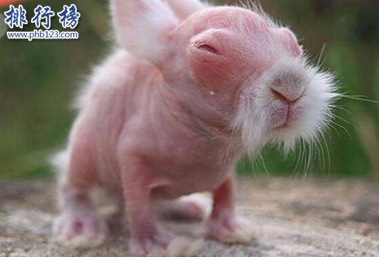 世界上最恐怖兔子:肿瘤兔(脸上长满黑色肿瘤)