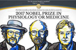 2017诺贝尔生理学或医学奖:三名美国科学家共享