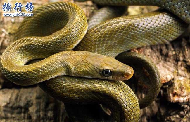 蛇的寿命有多长,世界上寿命最长的蛇(20万岁)