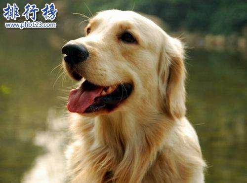 狗的寿命有多长,狗和人年龄换算(1岁等于人类18岁)